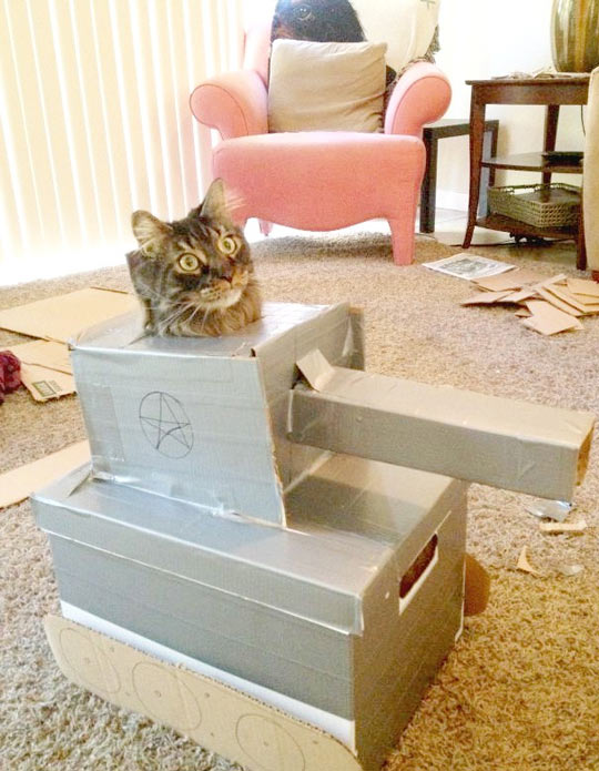 funny-cat-tank-cardboard-box-playful