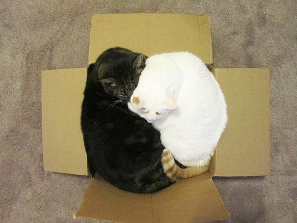 funny-cats-if-it-fits-i-sits-10