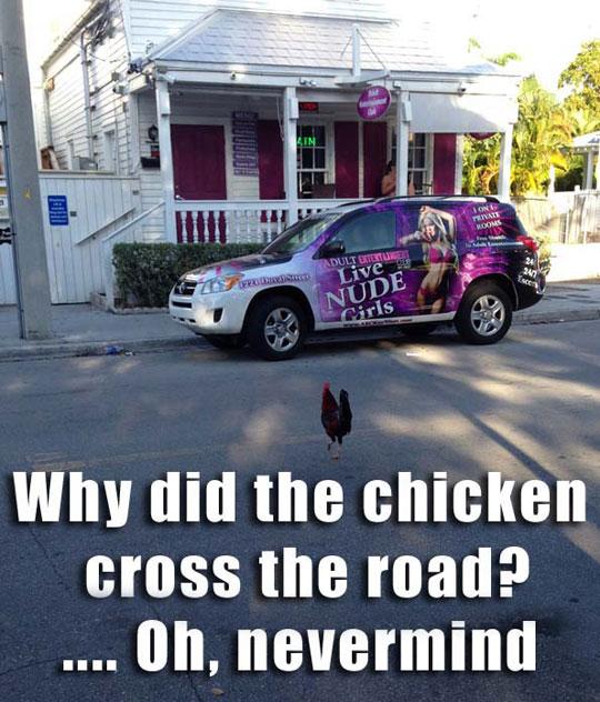 funny-chicken-crossing-road-Key-West-trip