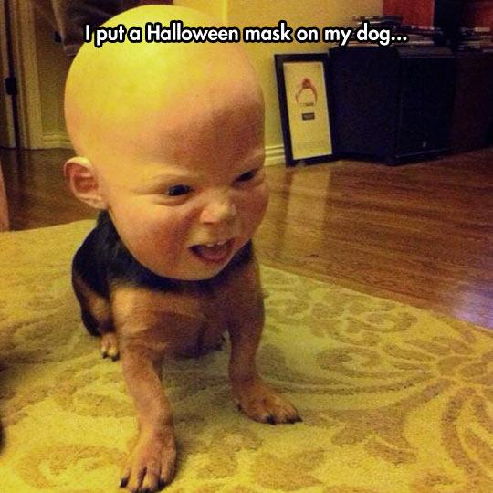funny-creepy-dog-baby-Halloween-mask