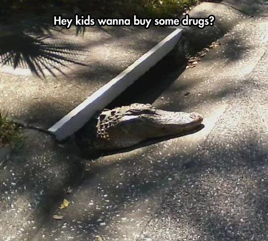 funny-crocodile-alligator-sewer-street
