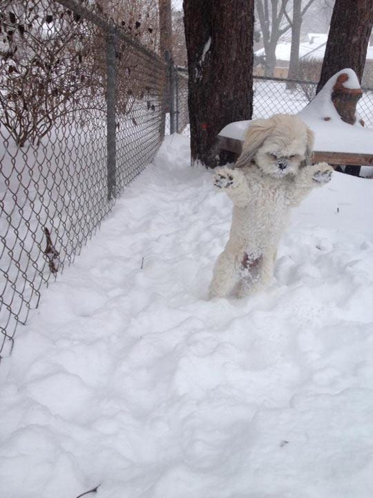 funny-cute-dog-winter-fluffy