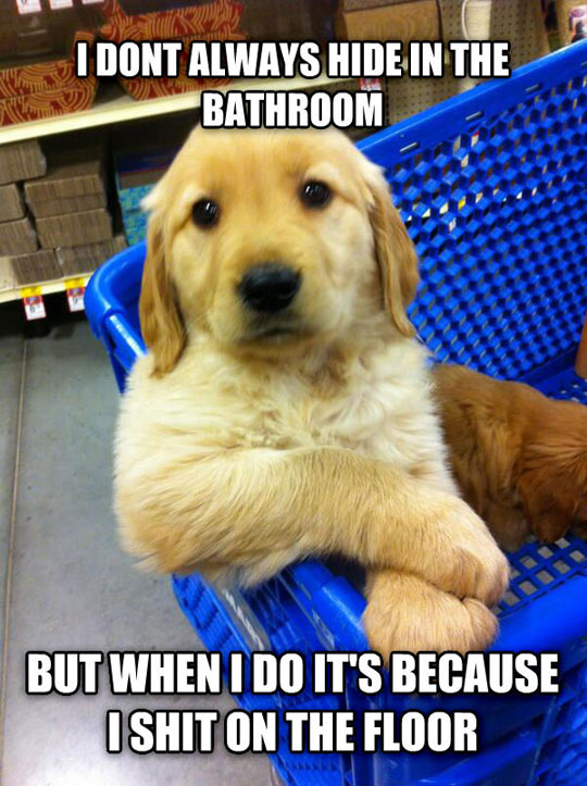 Most interesting puppy in the world…