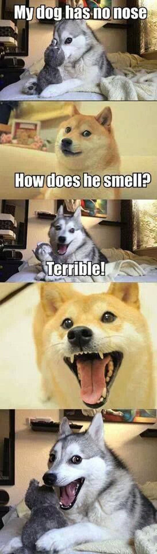 Funny Husky Jokes Meme : Wow such funny many jokes