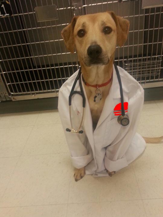 funny-dog-doctor-coat-kennel