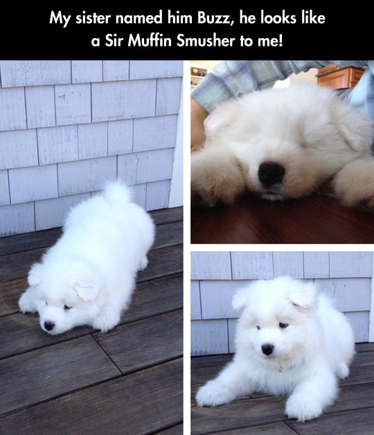 The Fluffiest Fluffy Dog Ever