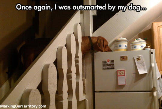 funny-dog-fridge-cookie-stairs