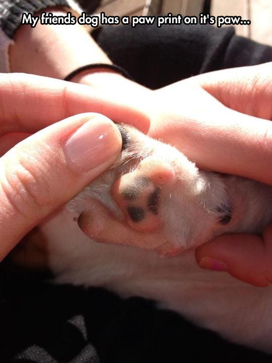 funny-dog-friend-paw-printed
