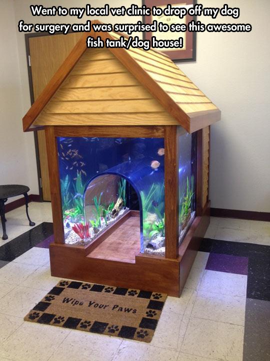 funny-dog-house-aquarium-local-vet