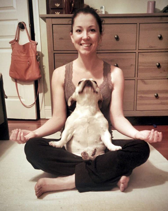 This dog loves his yoga…