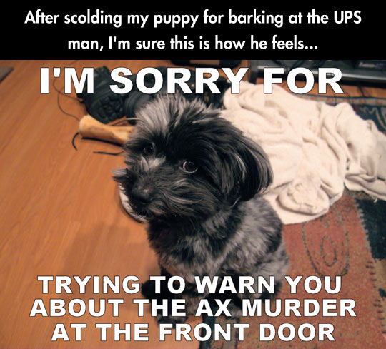 Misunderstood Puppy