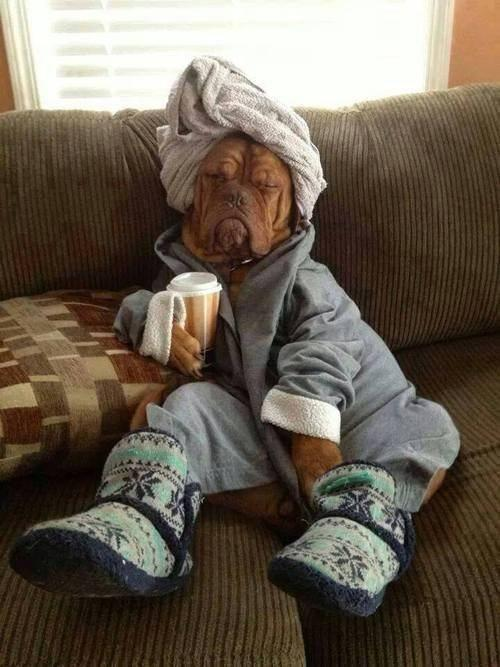 funny-dog-robe-towel-slippers
