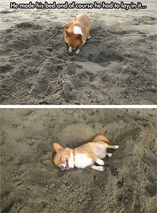 funny-dog-sand-bed-beach