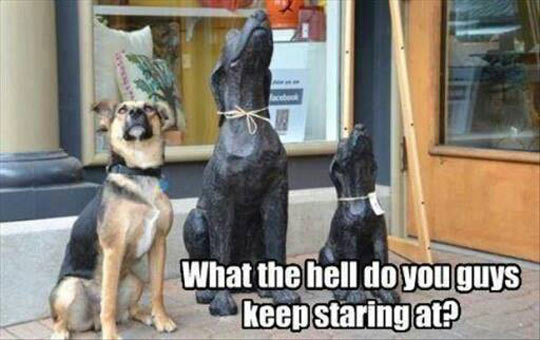 funny-dog-statue-looking-up