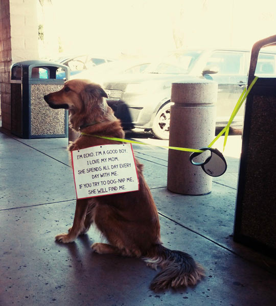 funny-dog-tied-leash-sign-store
