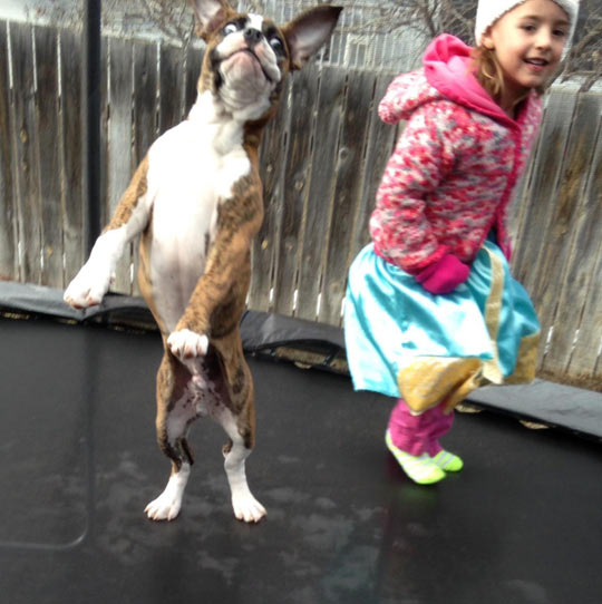 Best Friends On a Trampoline