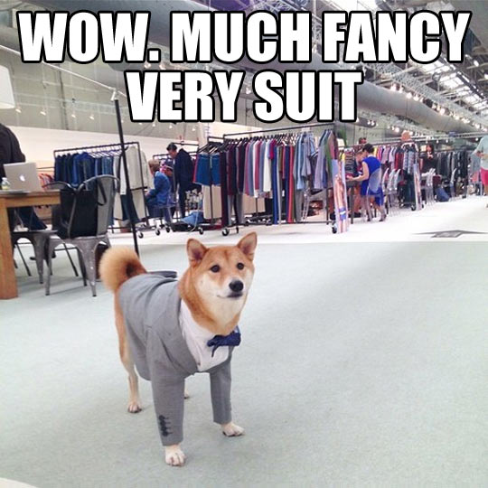 funny-doge-cute-puppy-suit