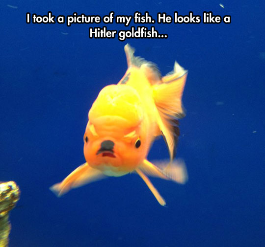 funny-evil-goldfish-spot-mustache