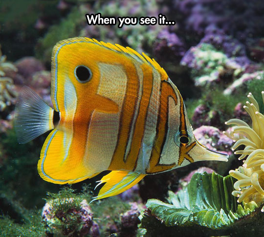 What Are You Trying To Say, Fish?