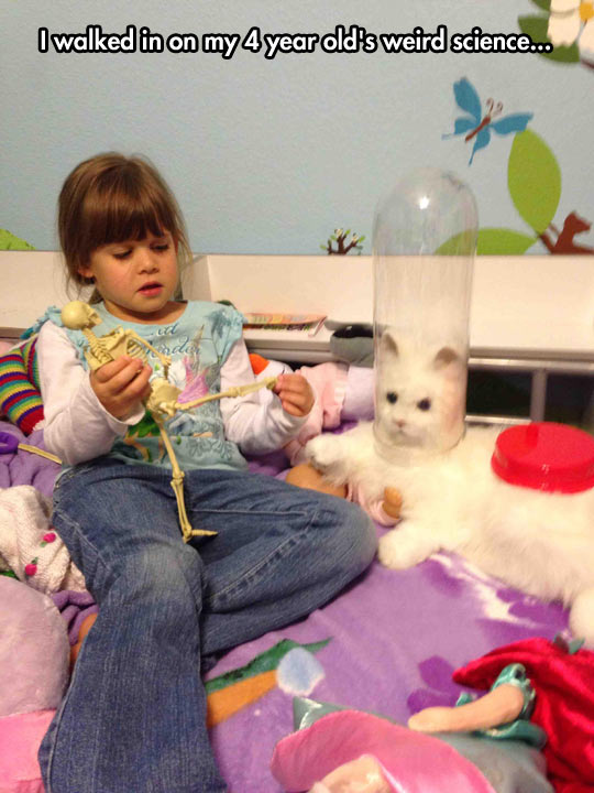 funny-four-year-old-science-project-cat
