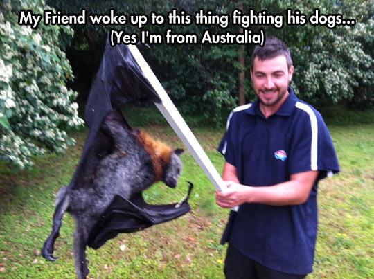 funny-giant-bat-dog-fight-flying-fox