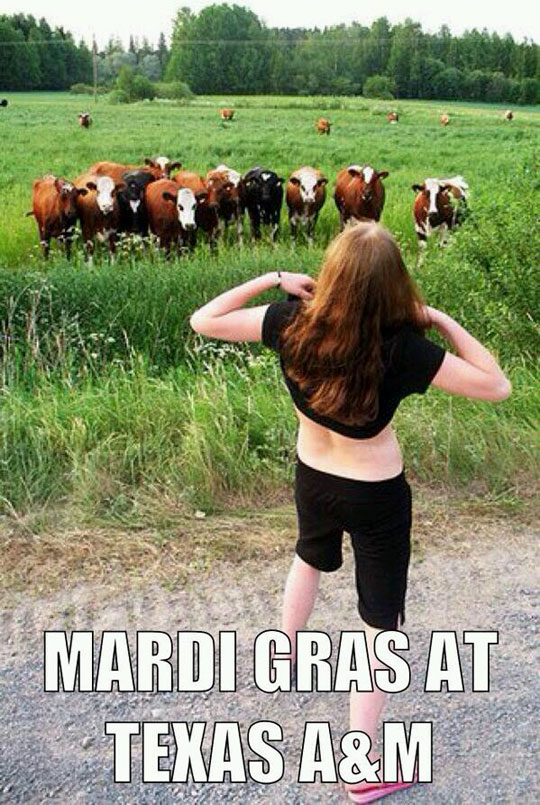 They find them to be udderly magnificent…
