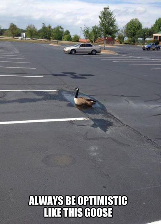 funny-goose-parking-water-puddle