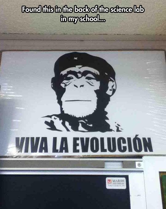 Evolución o muerte…