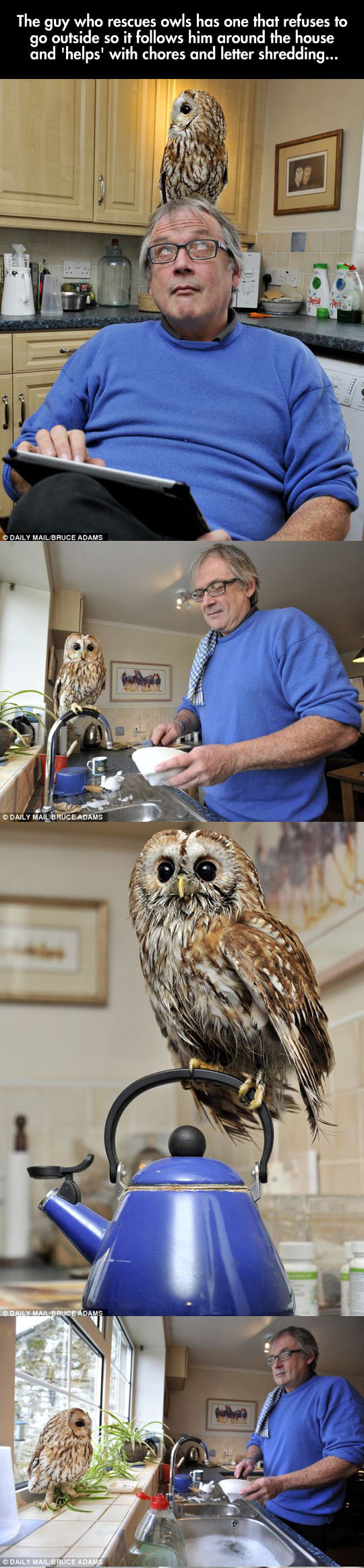 An Owl Pet That Helps With Chores, Sounds Like a Disney Movie