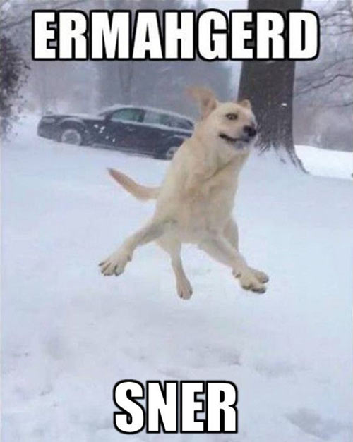 funny-happy-dog-jumping-snow-cold