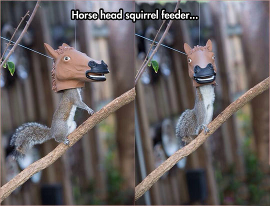 A Squirrel Feeder Like No Other