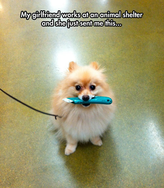 funny-little-dog-cutter-mouth