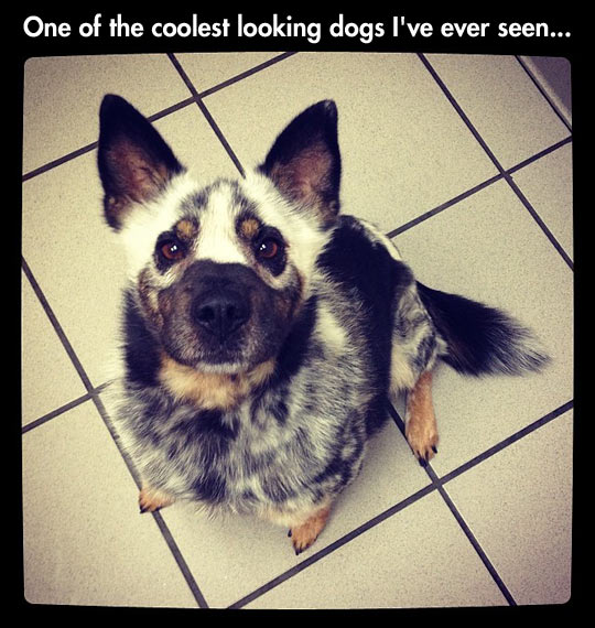 funny-looking-dog-beautiful-gorgeous