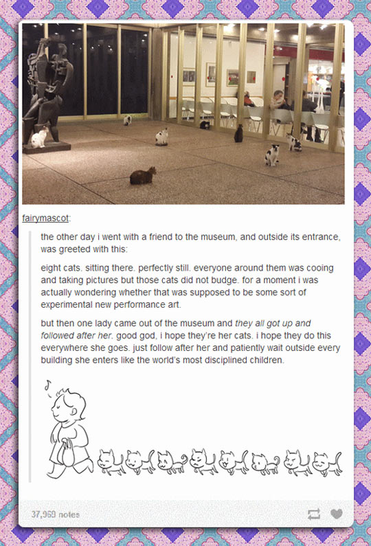 funny-lost-cats-entrance-museum
