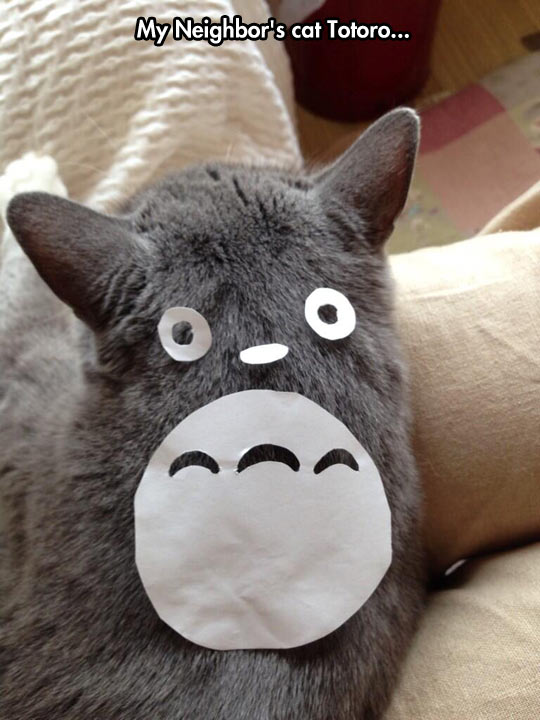 Is That You, Totoro?