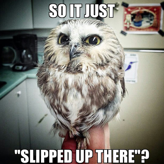 funny-owl-suspicious-looking-slipped