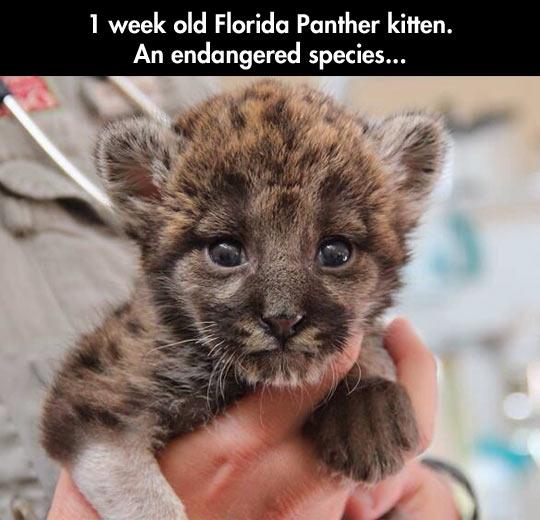 A endangered little fella…