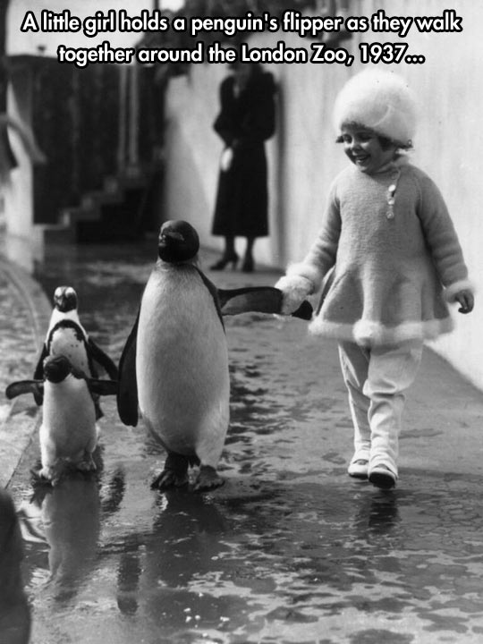 I want to go for a walk with a penguin…