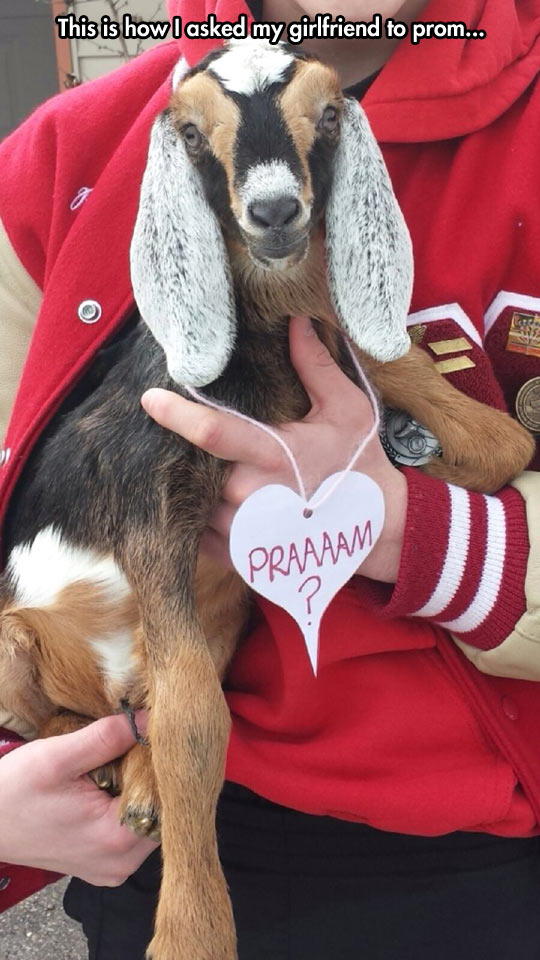 Will You Goat' O The Prom With Me?