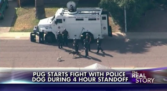 funny-pug-starting-fight-police-dog-standoff