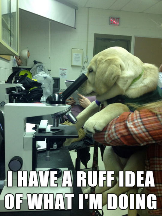 funny-puppy-science-lab-dog