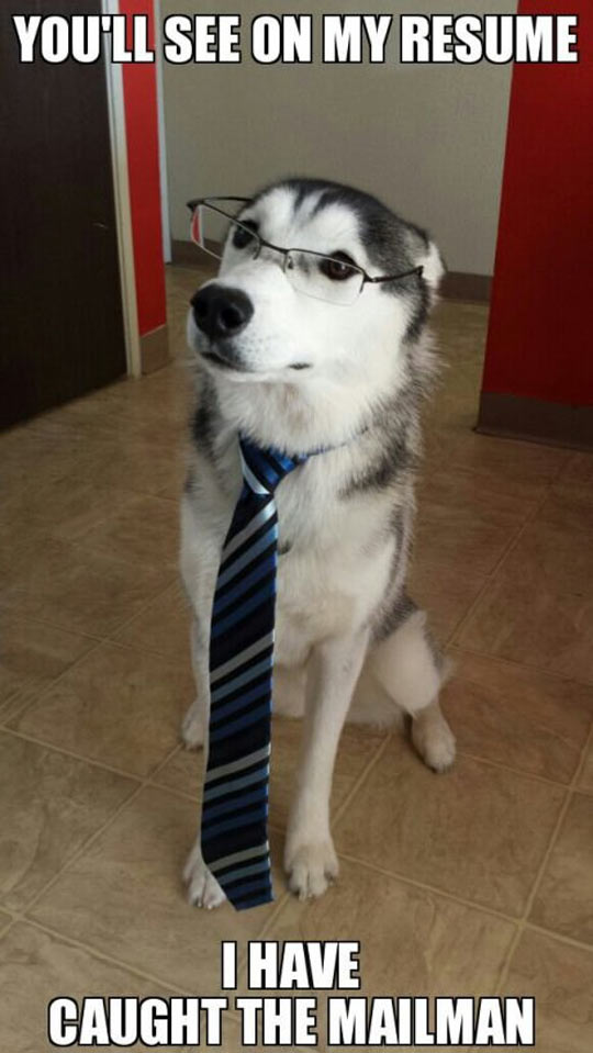 funny-resume-husky-caught-mailman