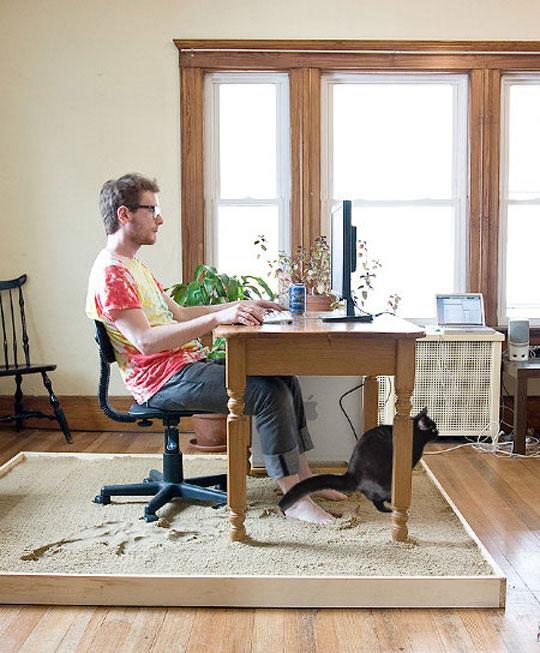 funny-sand-box-desk-cat-pooping