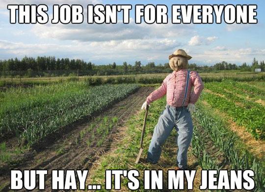 Corny Joke Scarecrow