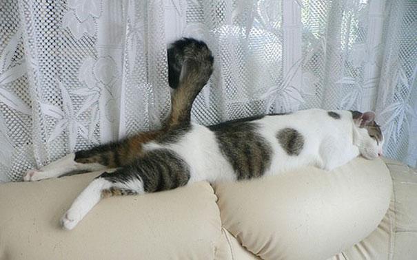 funny-sleeping-cats-18