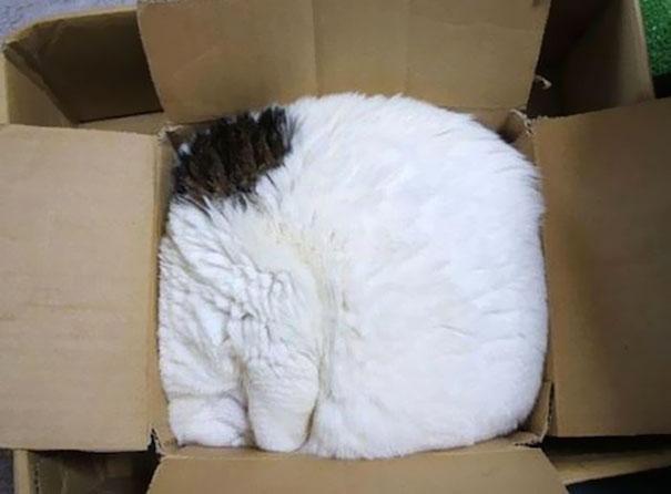 funny-sleeping-cats-19