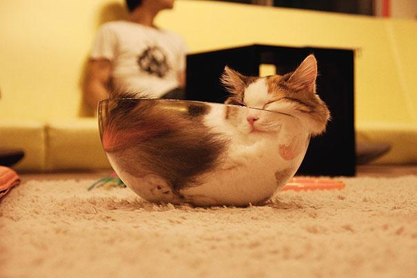 funny-sleeping-cats-8