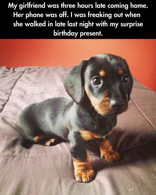 funny-surprise-girlfriend-puppy-birthday