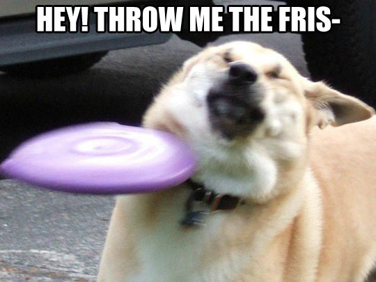 funny-throw-dog-frisbee-hit