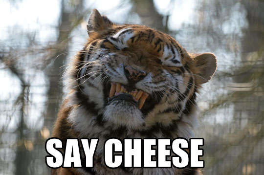 funny-tiger-face-smiling-teeth-fangs